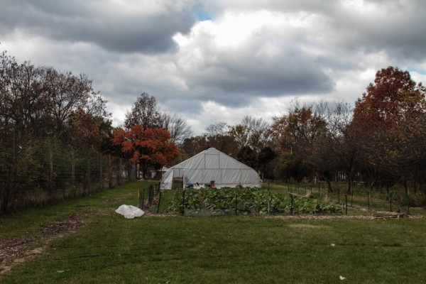 D-Town Farms, 7 acres in Rouge Park